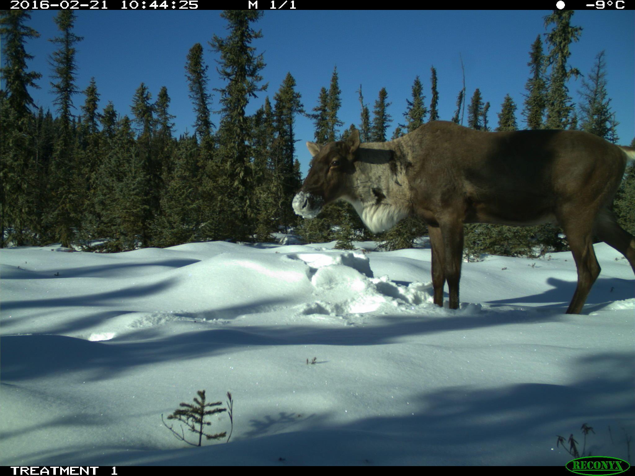 WildCo - Wildlife Coexistence Lab